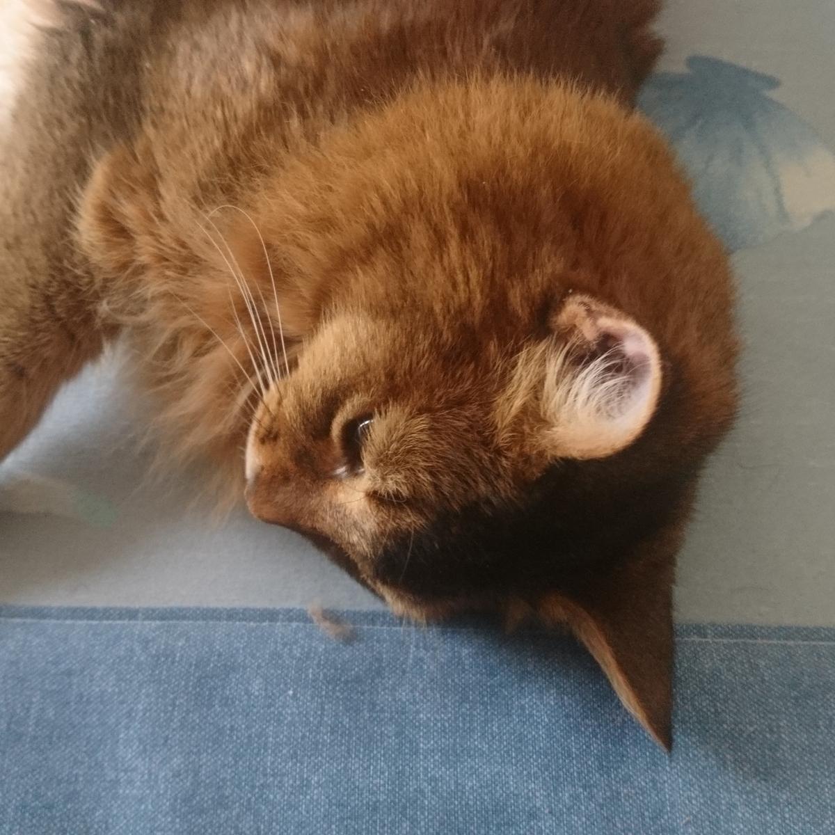 寝る猫、チー