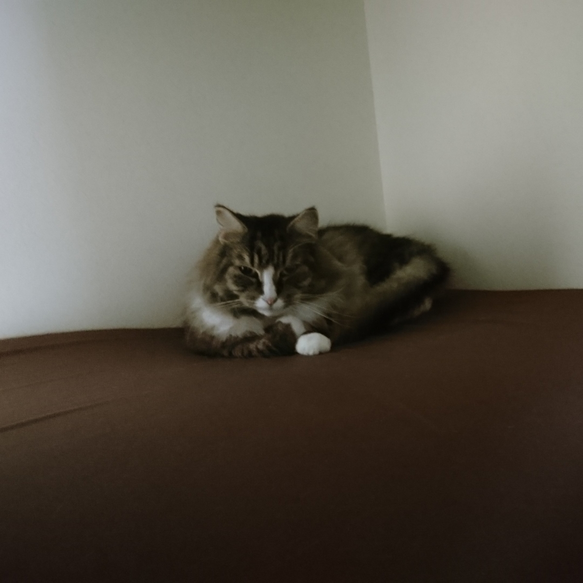 押入で寝る猫、トト