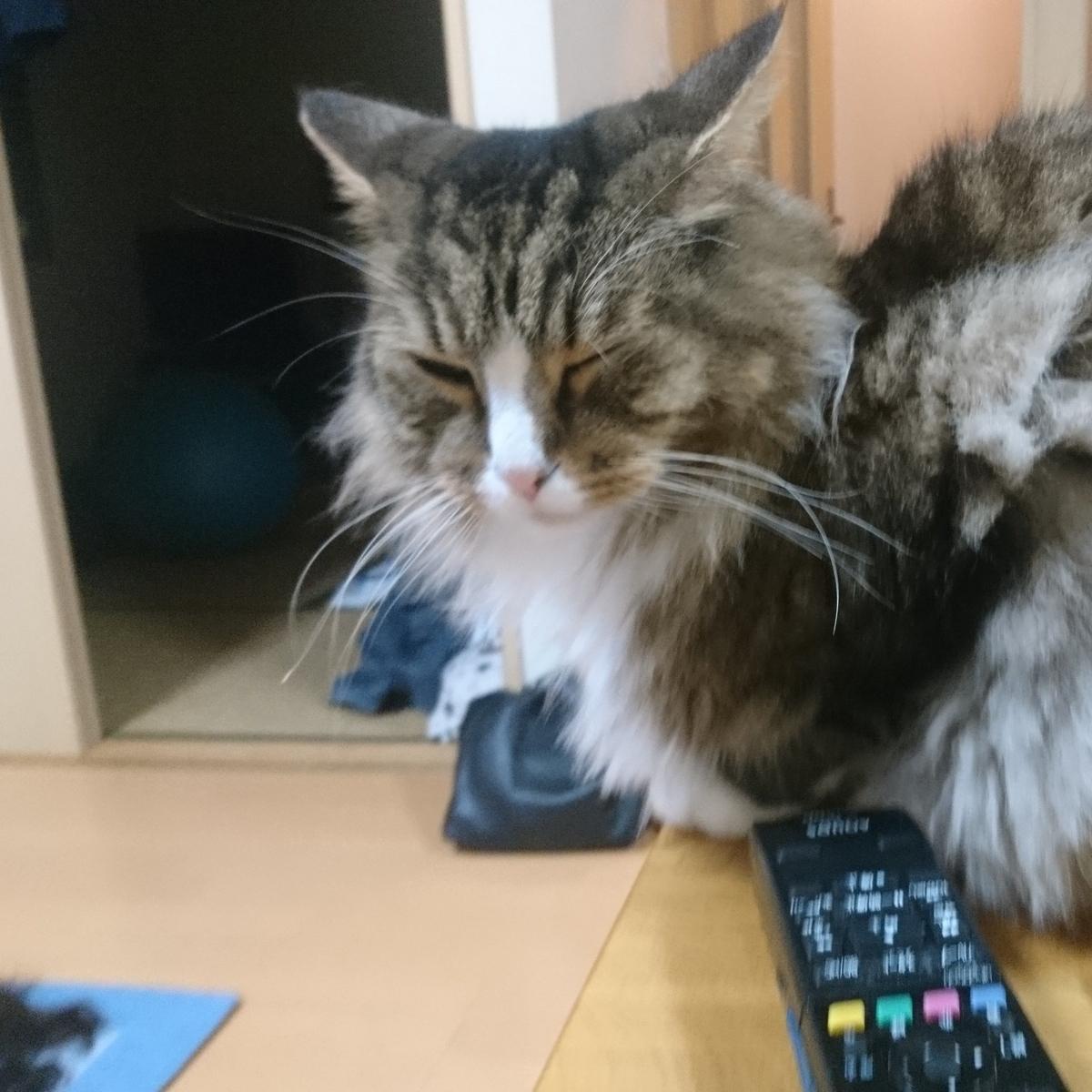 眠たい猫、トト