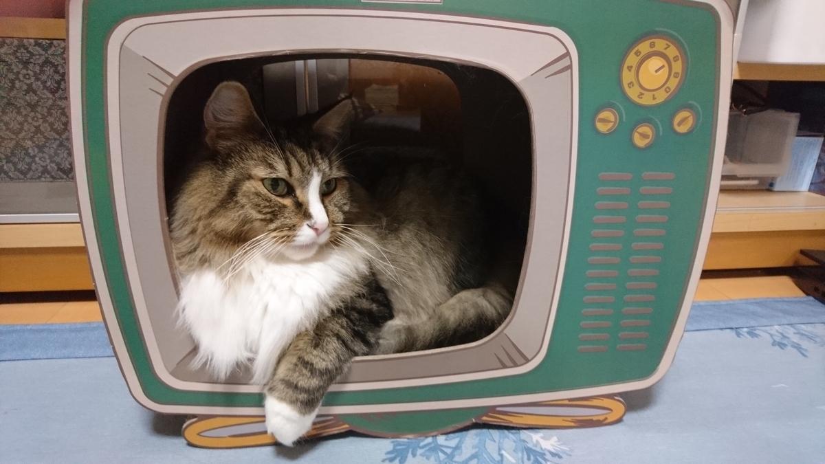 箱の中の猫、トト