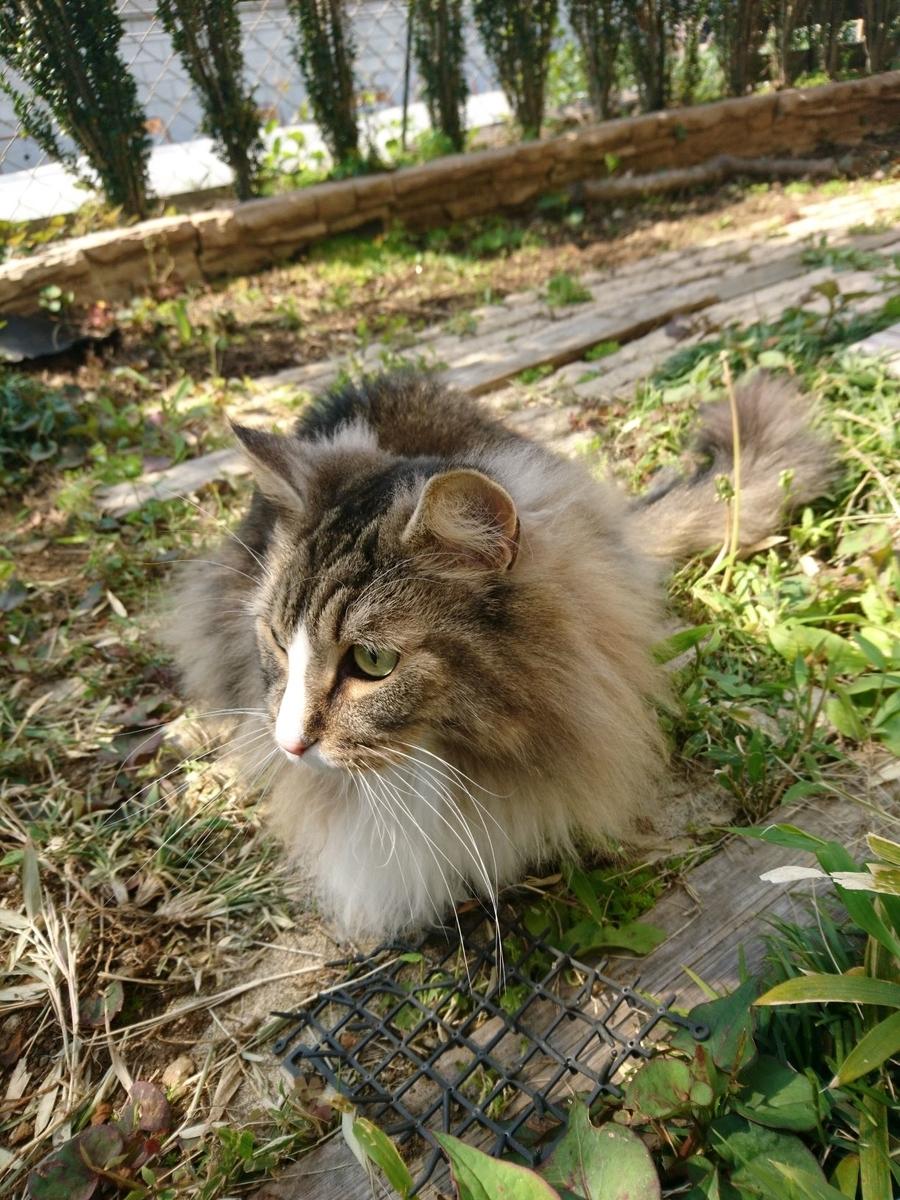 お庭で遊ぶ猫、トト