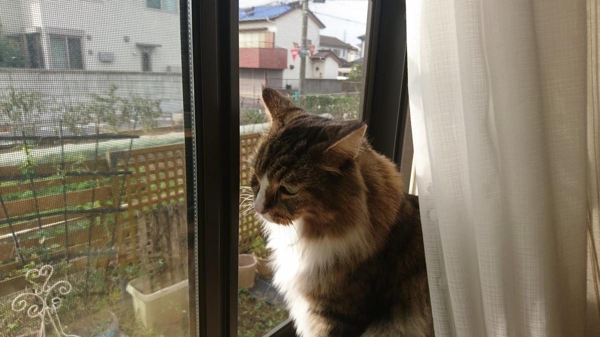 外を警備する猫、トト