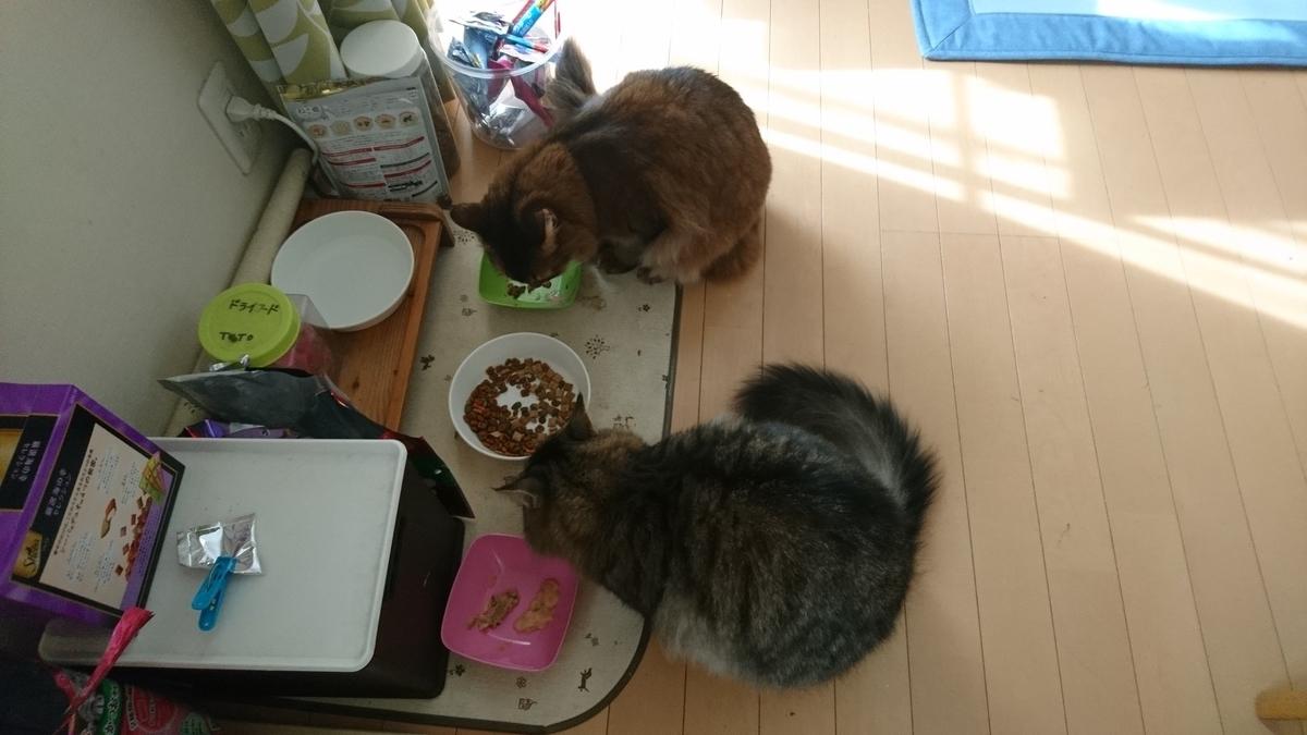 小腹が減った猫、トトとチー