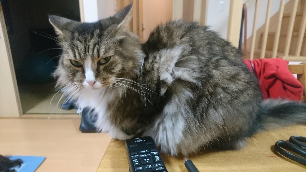 リモコンをくれる猫、トト