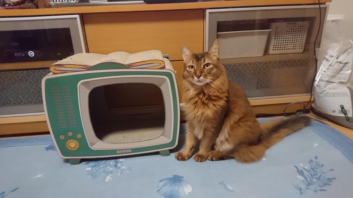 TVをくれる猫、チー