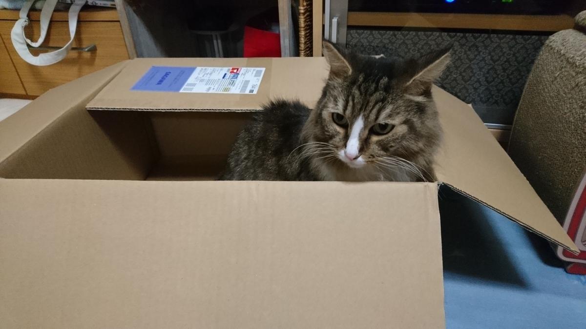 新しい基地を見つけた猫、トト