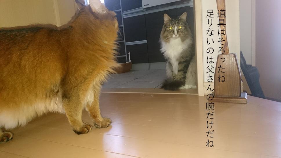 三脚とリモコンで撮影した猫、トトとチー