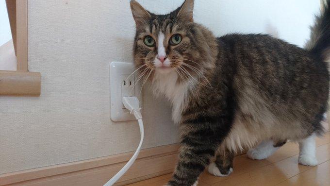 充電される猫、チー