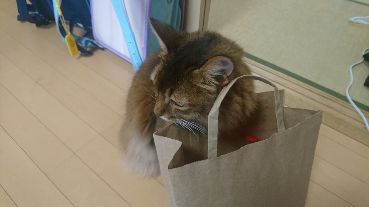 紙袋をあさる猫、チー