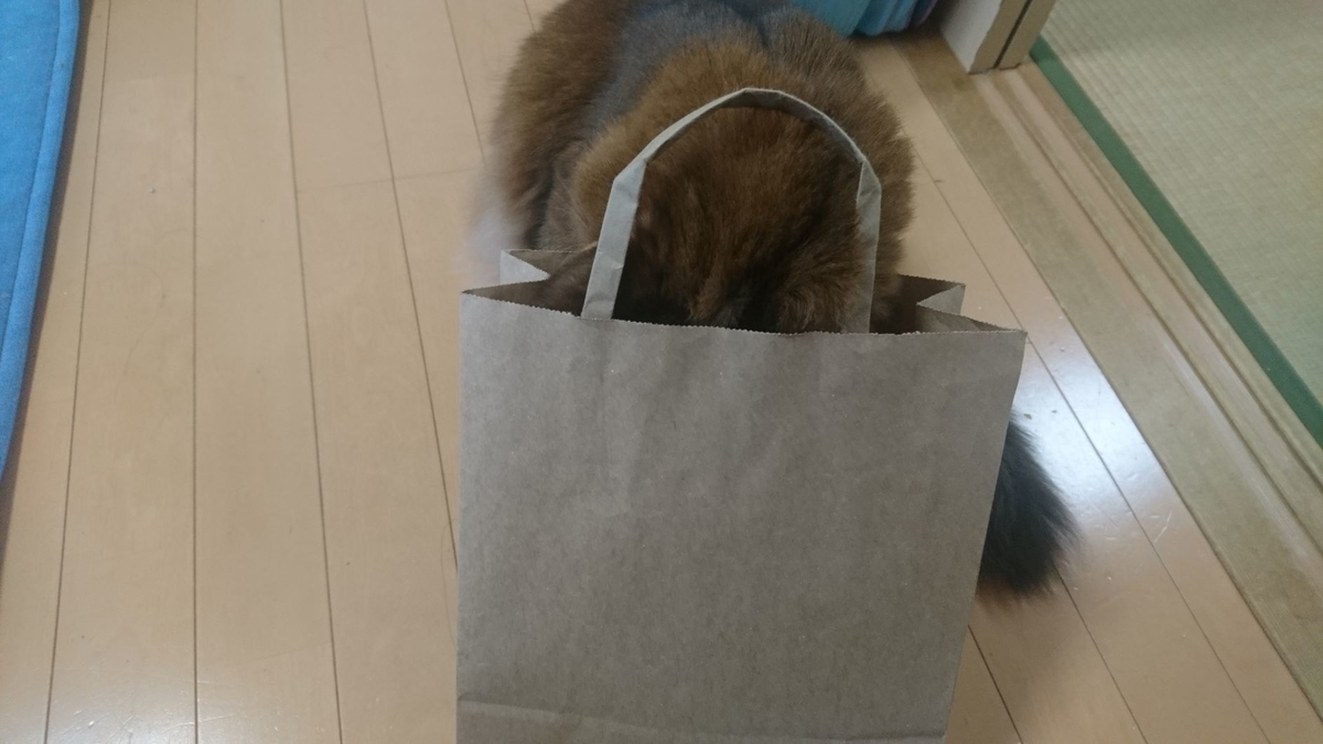紙袋に顔を突っ込む猫、チー