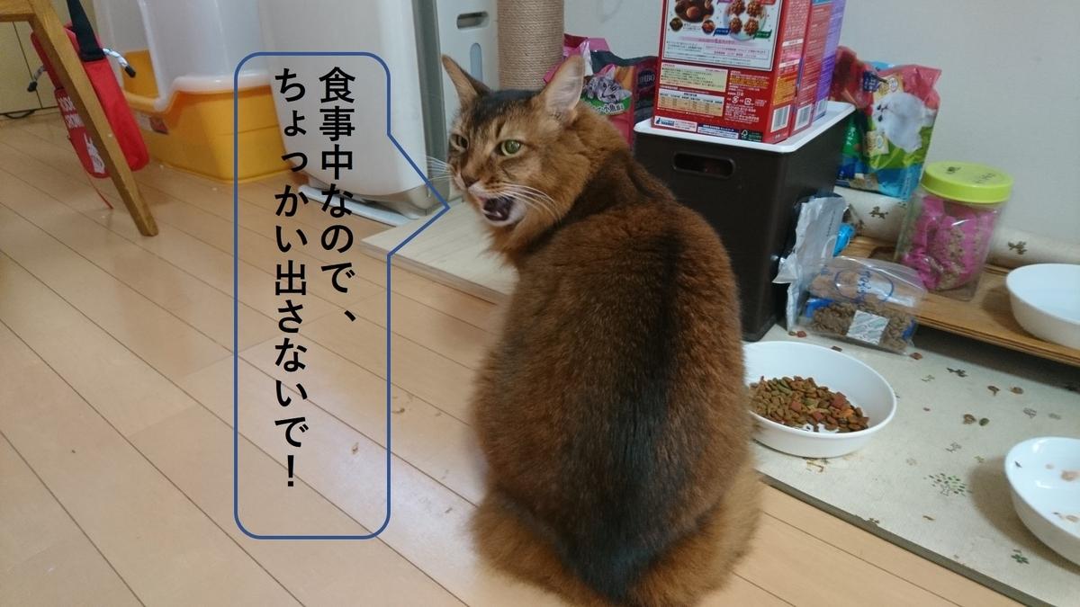 食事中の猫、チー