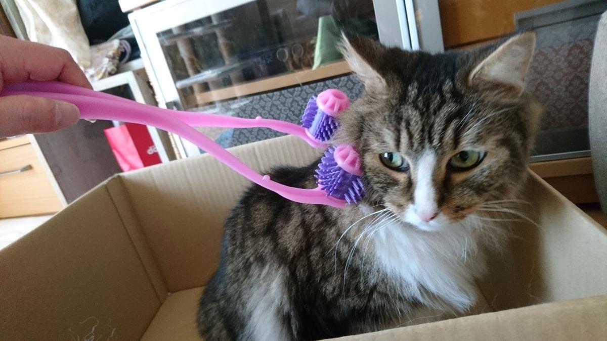 ニャンコの癒しにかなり警戒している猫、トト