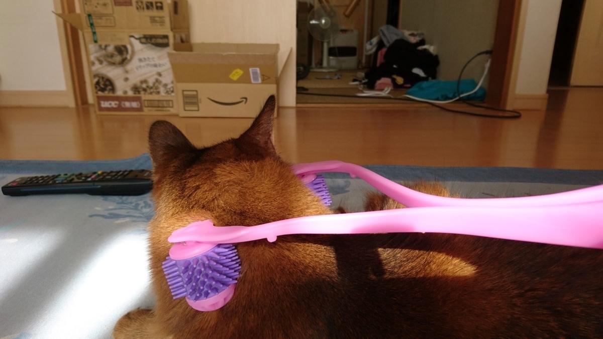 ニャンコの癒しに初チャレンジする猫、チー