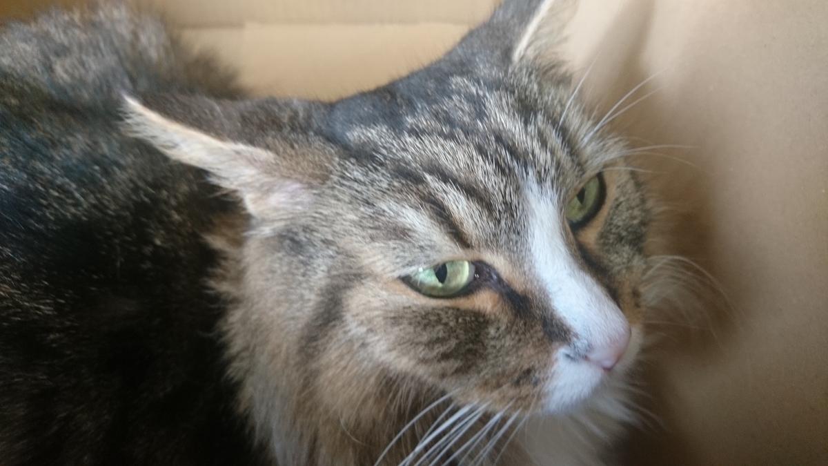 獲物を発見した猫、トト