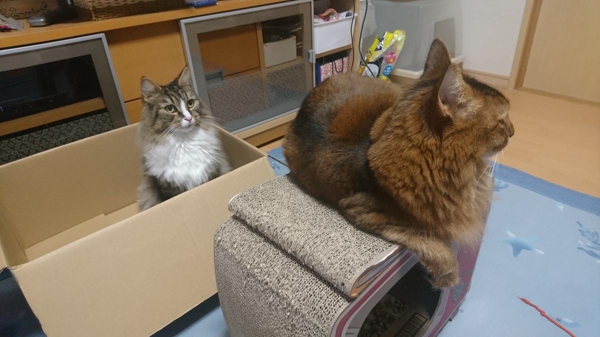 後ろから狙いを定める猫、トト