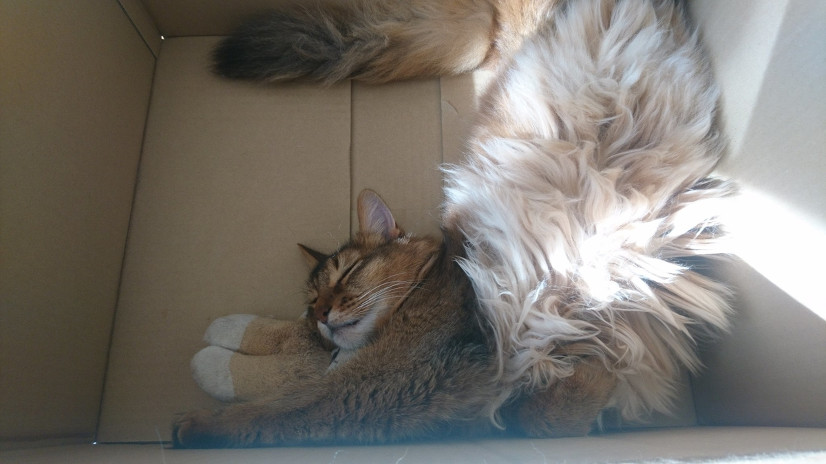 眠り猫、チー