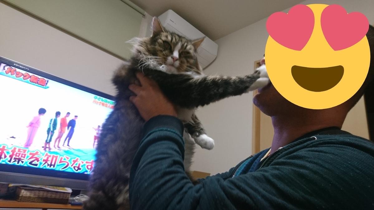 モフモフを嫌がる猫、トト