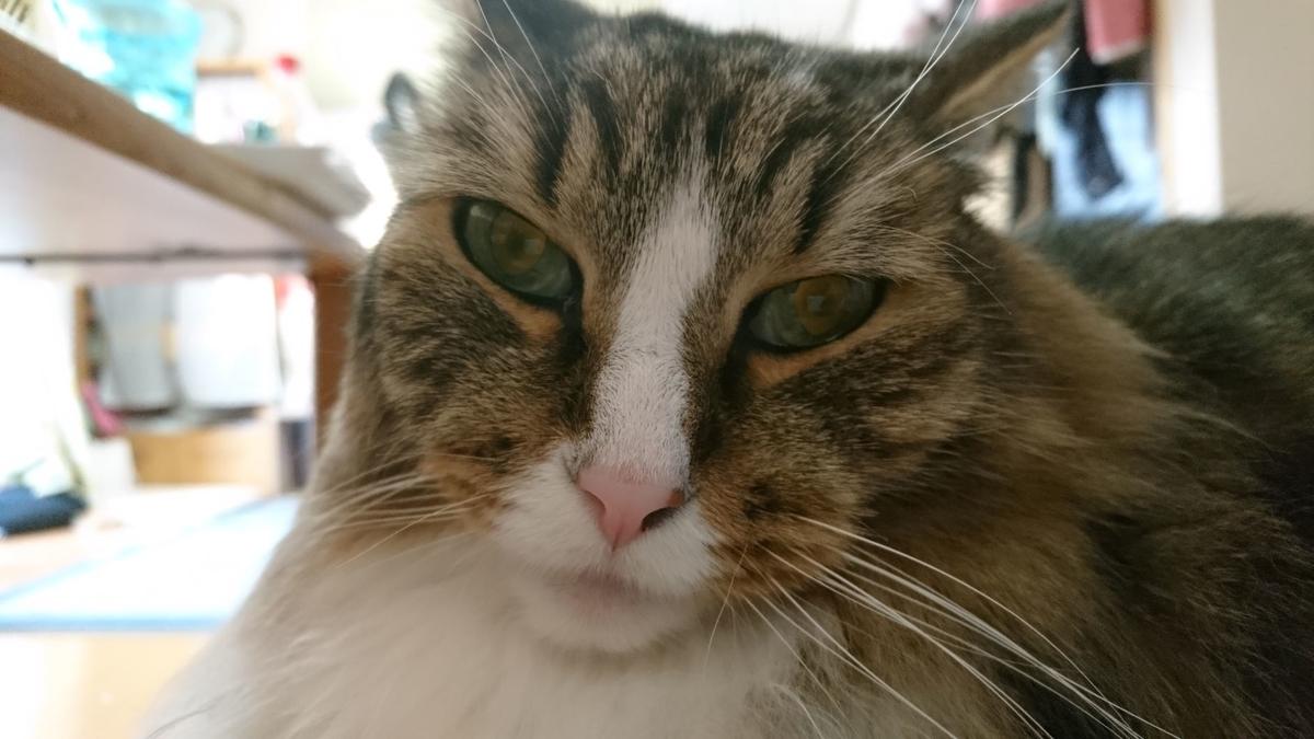 ちょっと不細工な猫、トト
