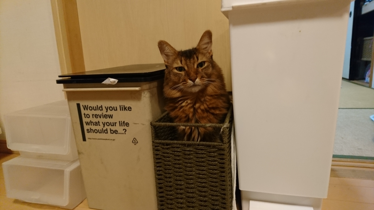 狭いところが好きな猫、チー