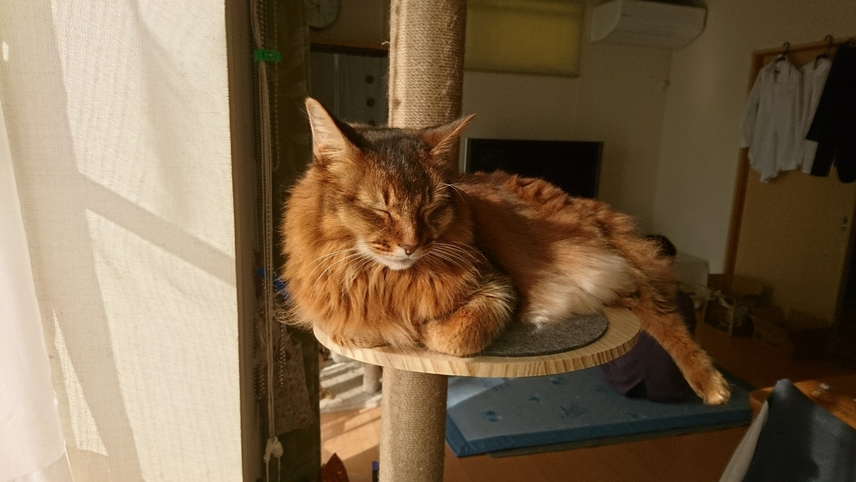 朝日を浴びる猫、チー