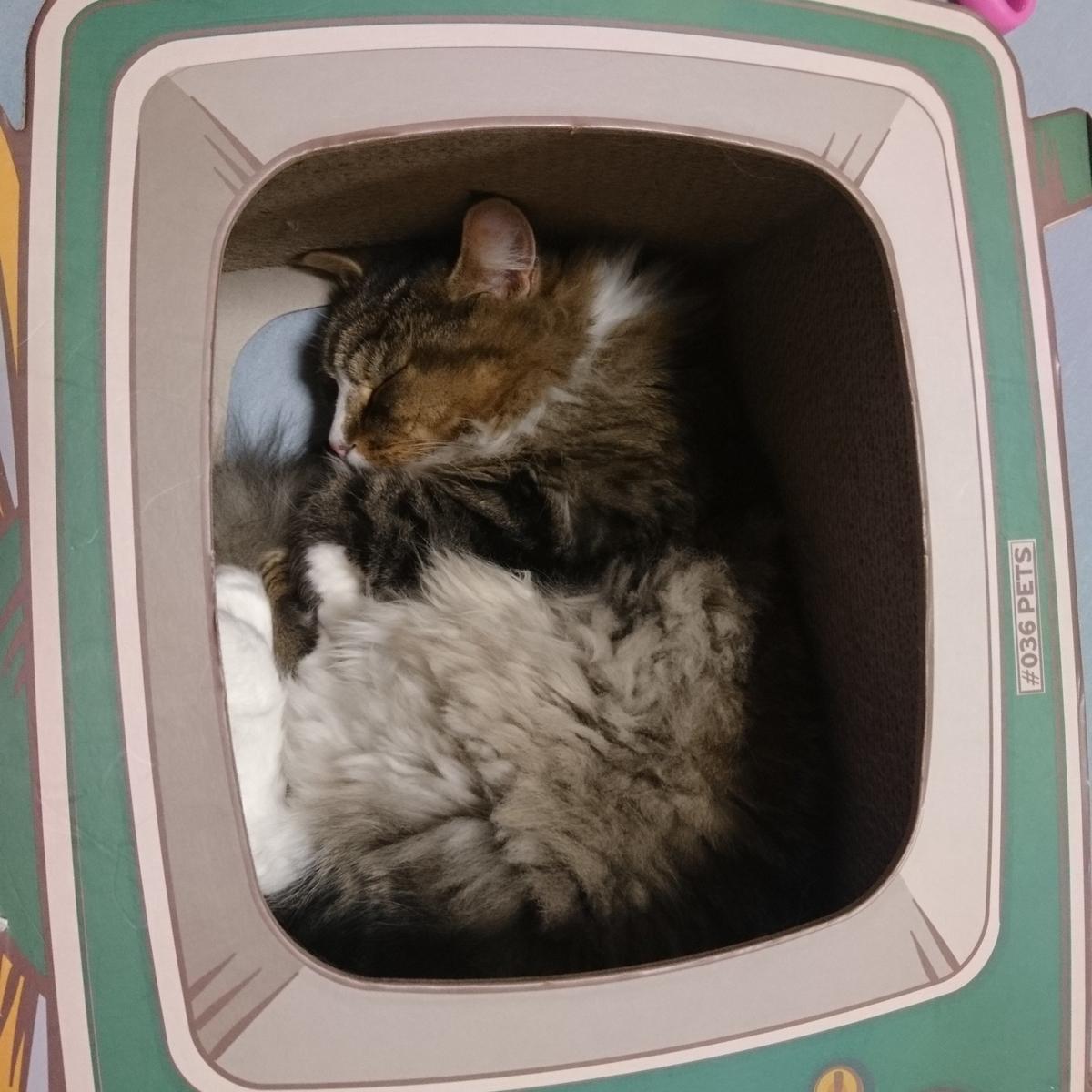 箱の中で眠る猫、トト