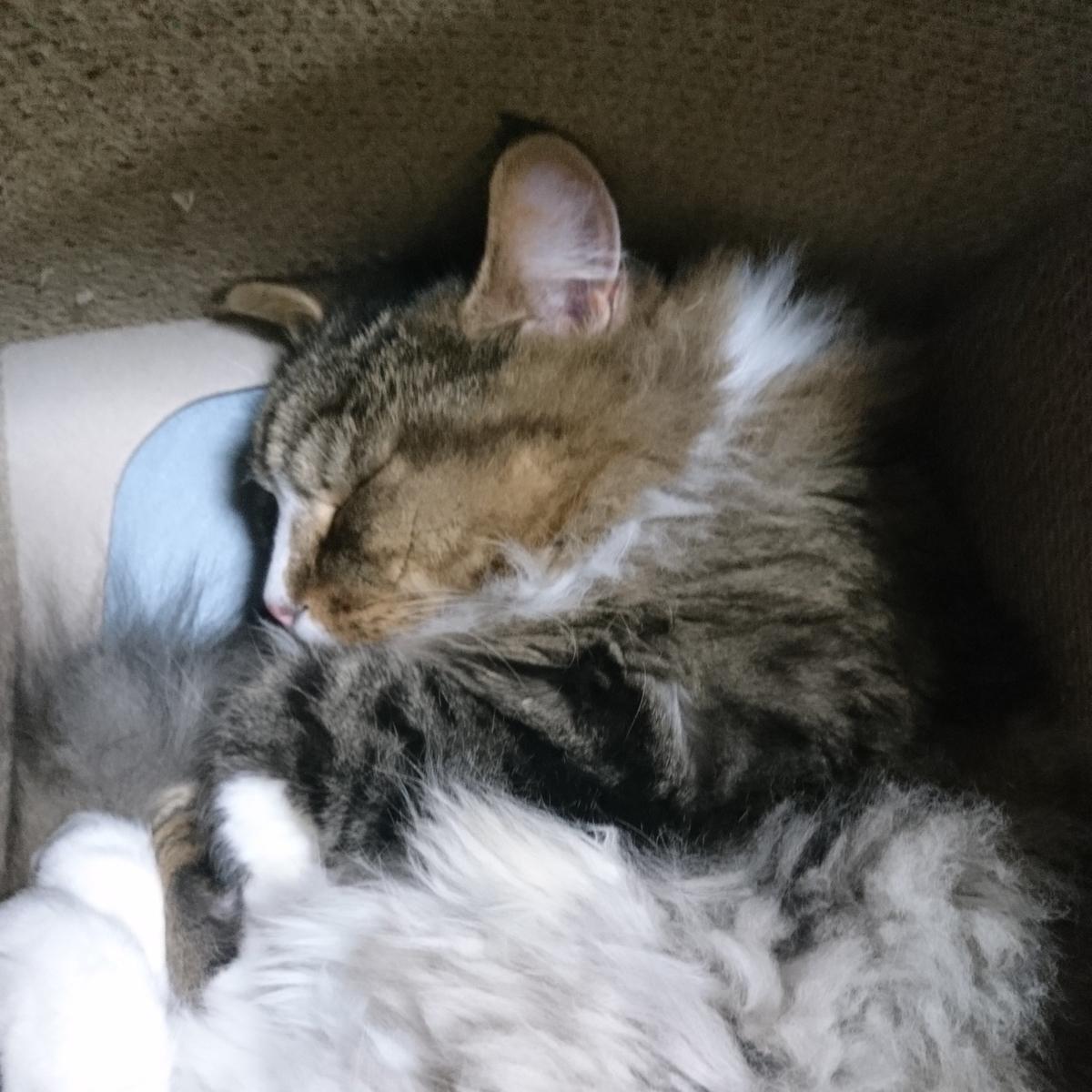 眠り猫、トト