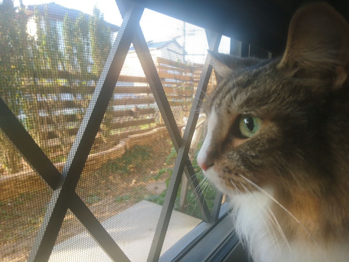 外に出たいと要求する猫、トト
