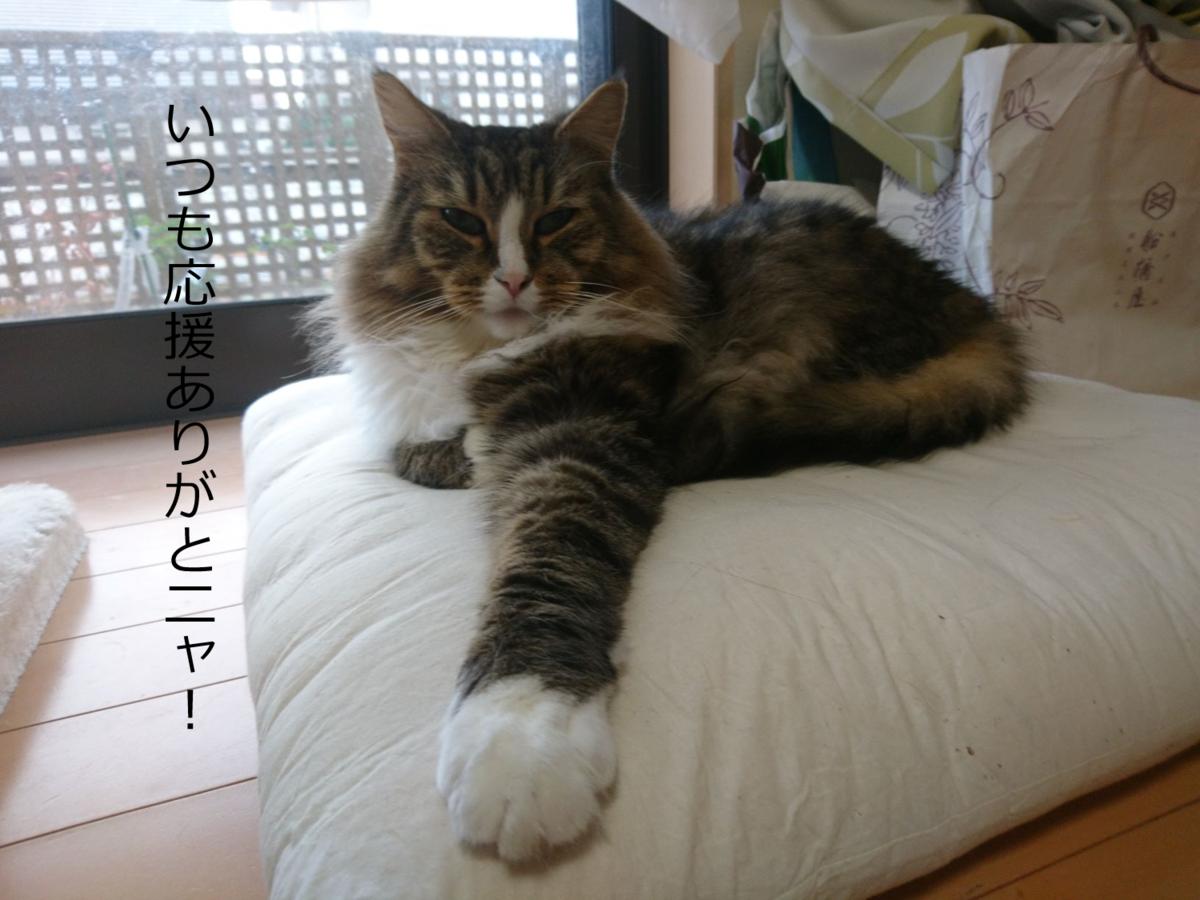 握手会の猫、トト