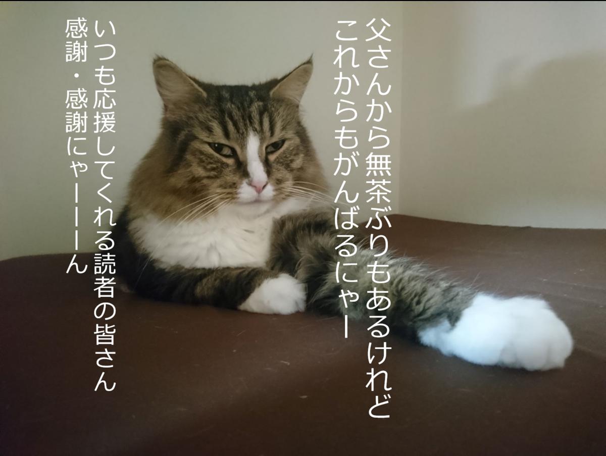 感謝を表す猫、トト