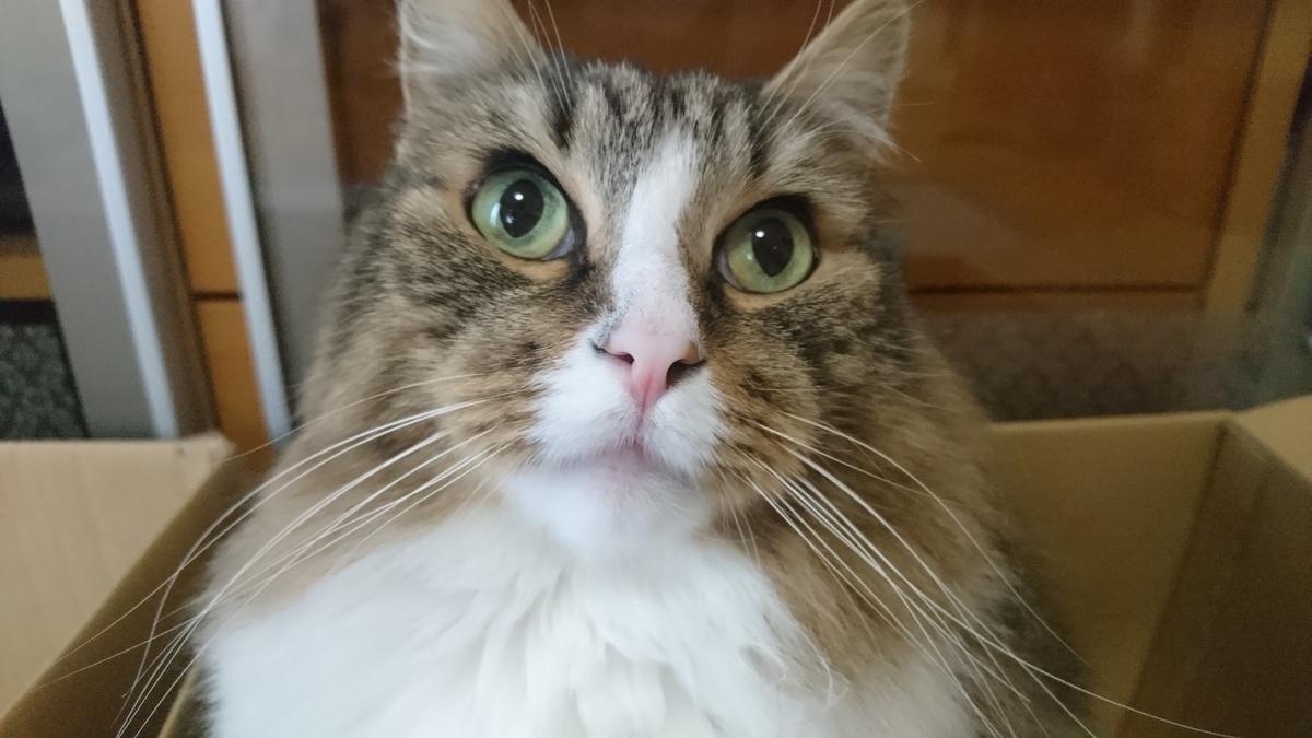 どや顔の猫、トト
