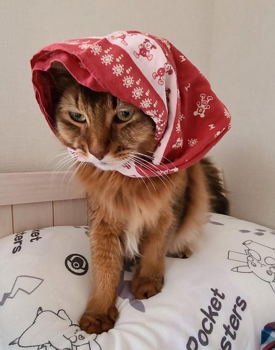 赤ずきんにされた猫、チー