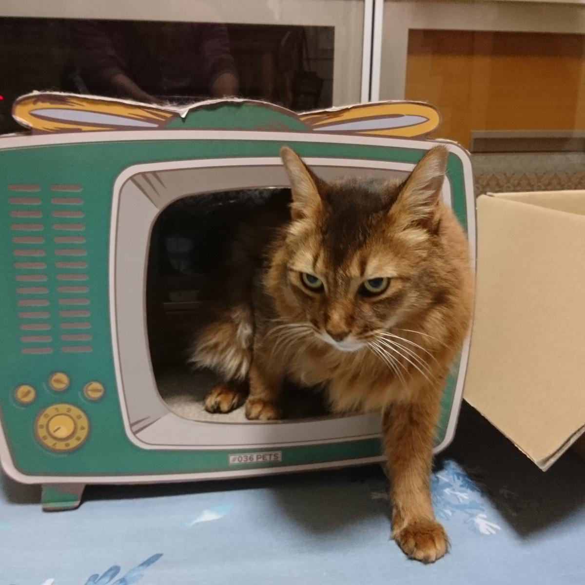 機嫌が悪い猫、チー