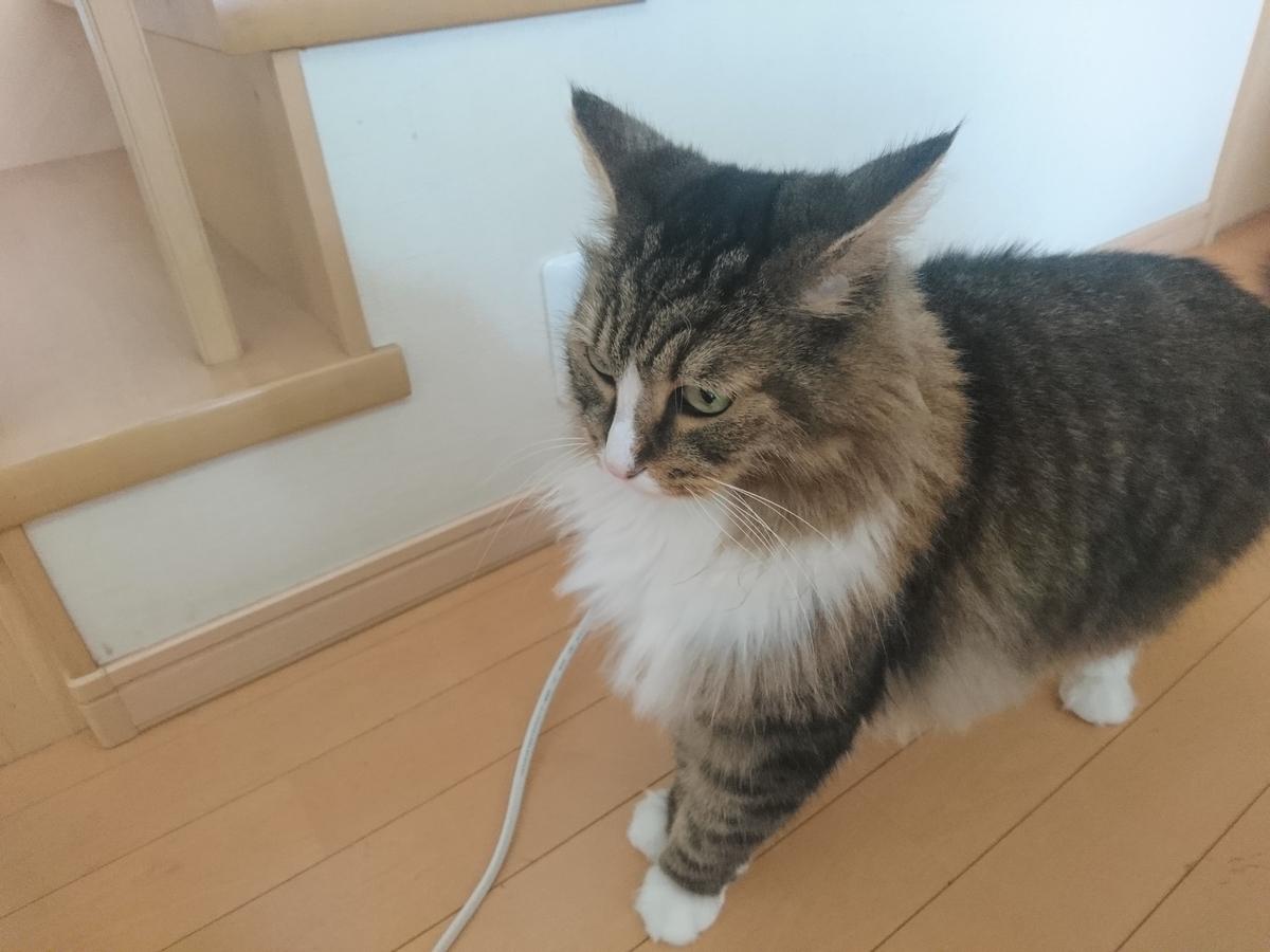 何かを見つけた猫、トト