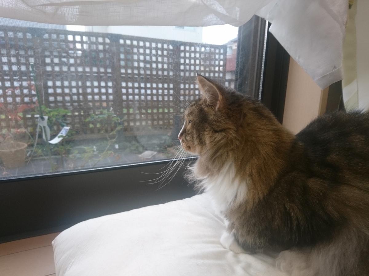警備を任された猫、トト