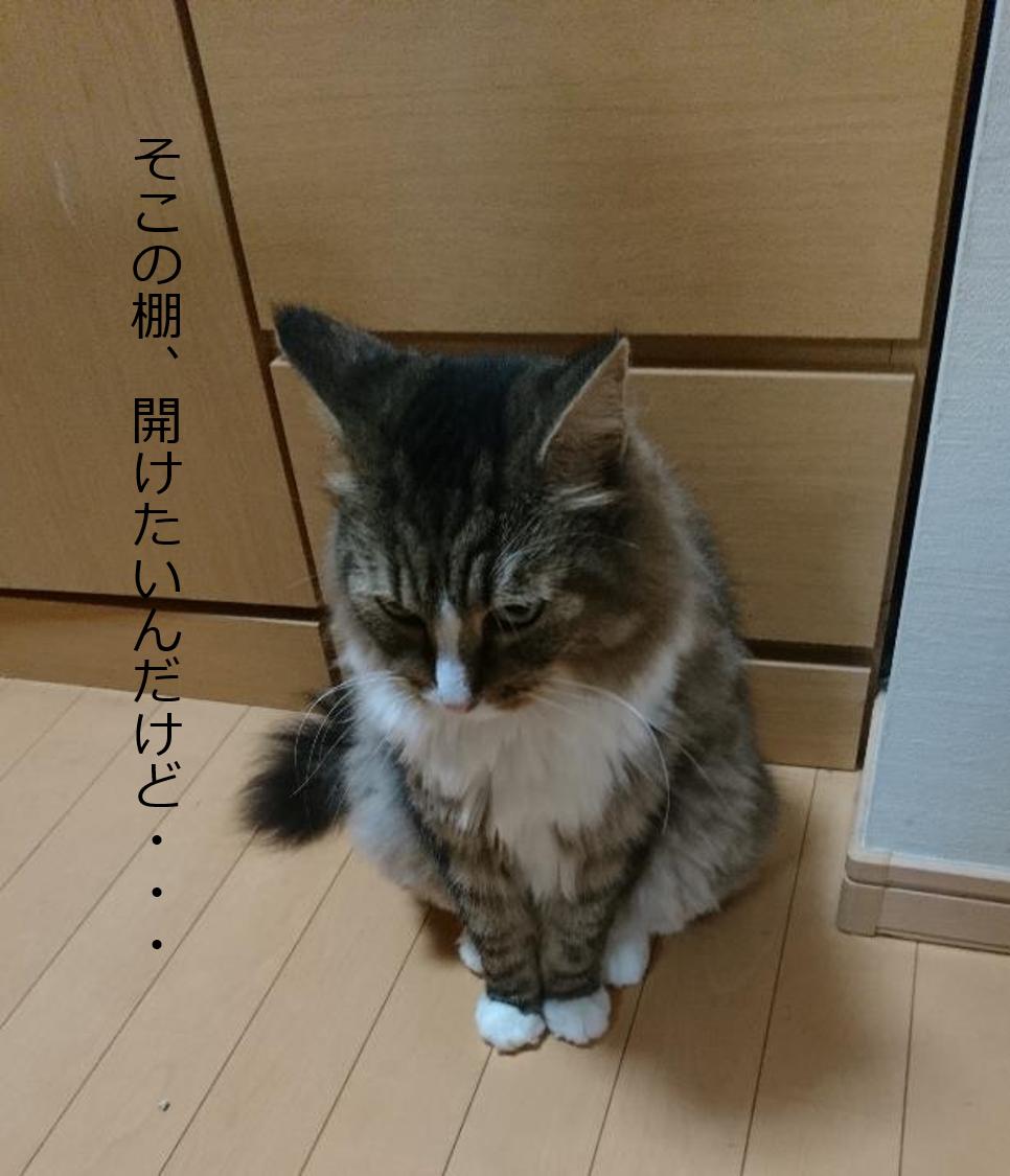 行く手を阻む猫、トト