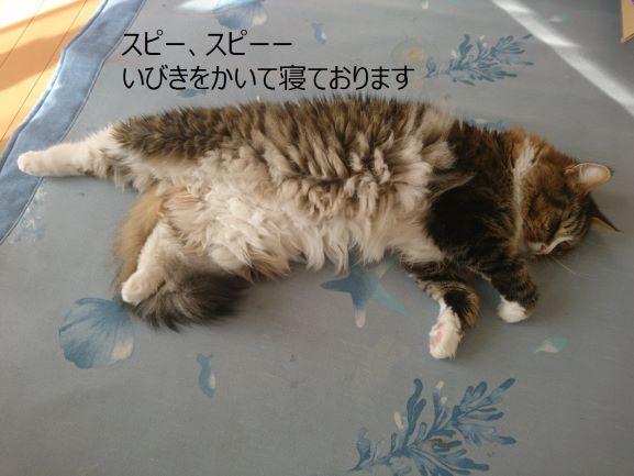 いびきをかいて寝る猫、トト