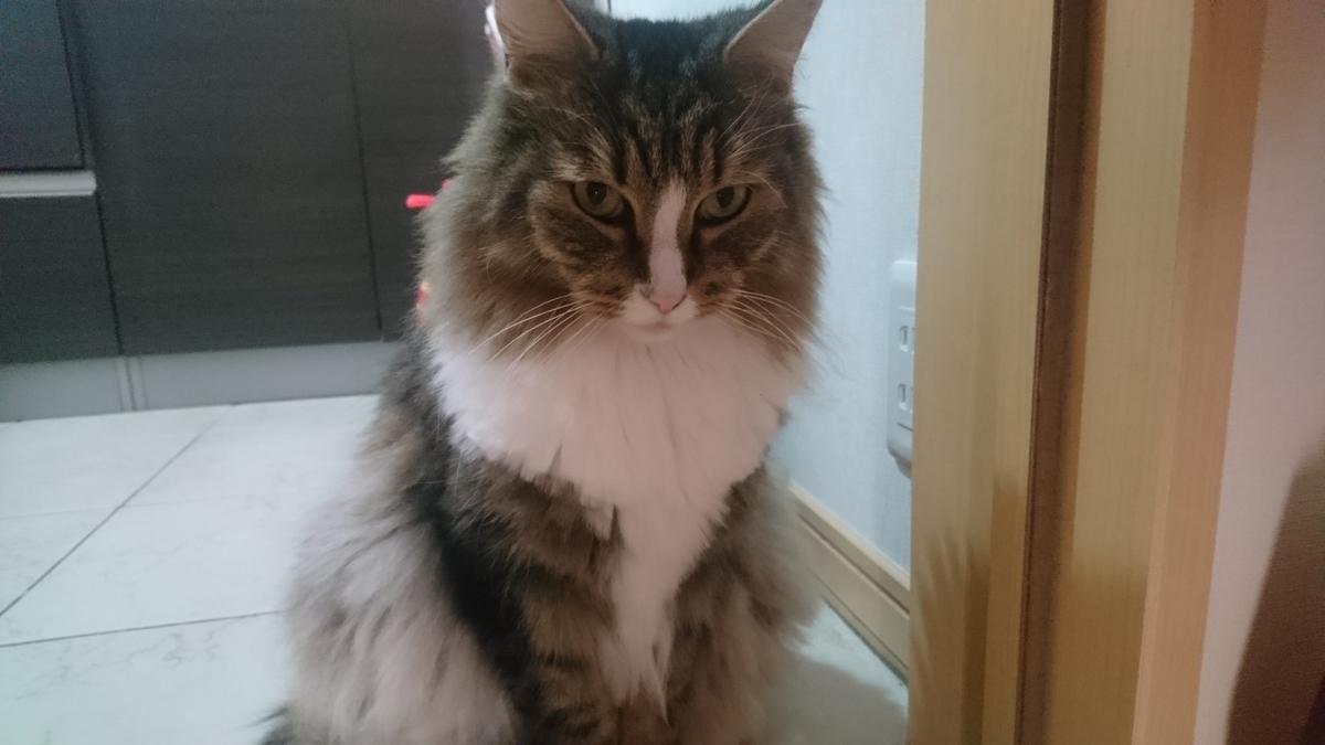 怒ってる猫、トト
