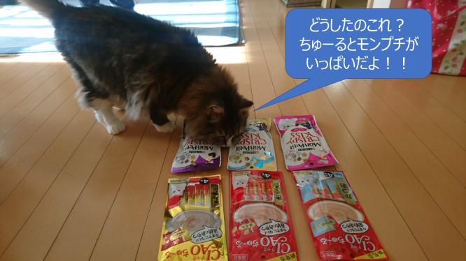 プレゼントに興味津々の猫、トト