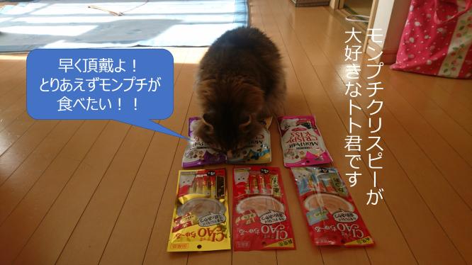 モンプチクリスピーが気になる猫、トト