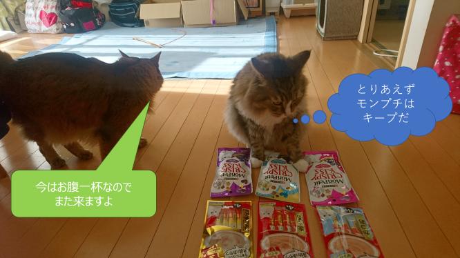 モンプチを独占する猫、トト