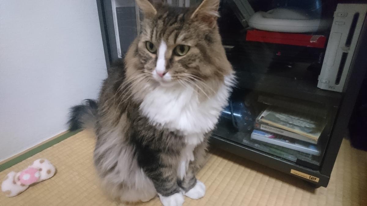 イケメンな猫、トト