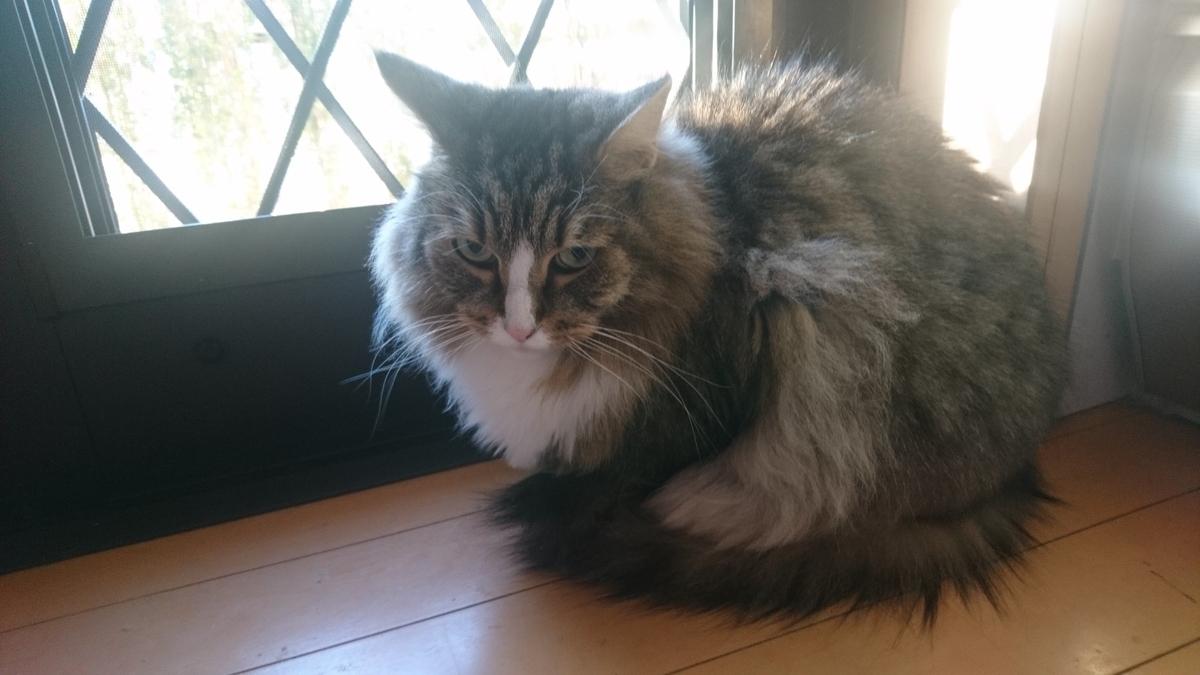 ニャルソック中の猫、トト