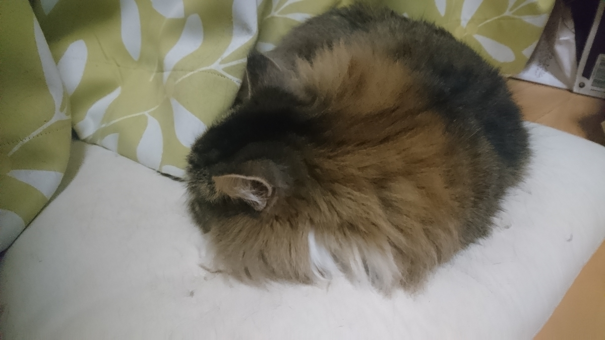 リラックスしてくつろぐ猫、トト