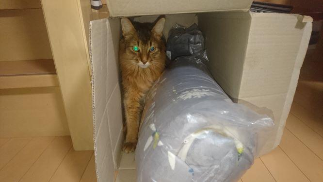 大掃除で行き場をなくした猫、チー