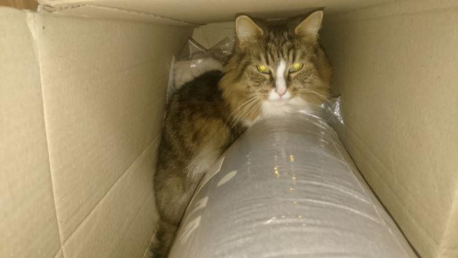 大掃除で行き場をなくした猫、トト