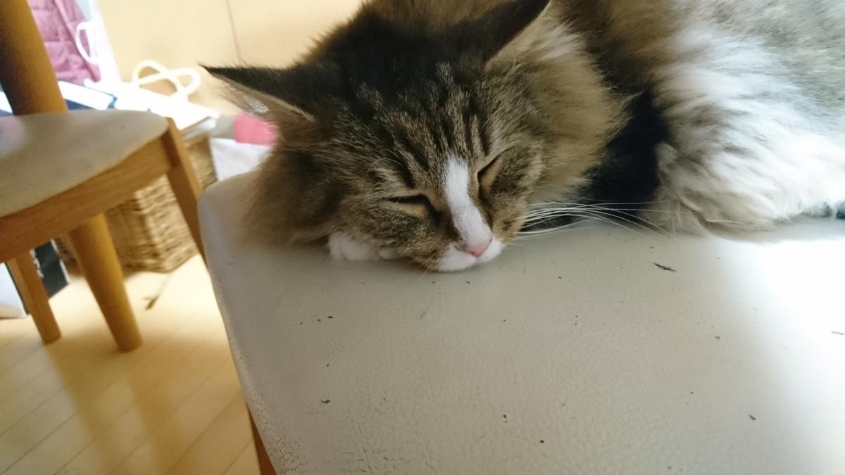 飼主の隣で寝る猫、トト