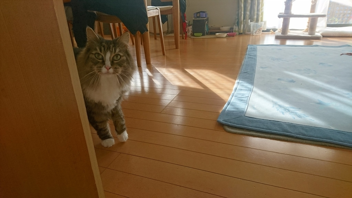 監視する猫、トト