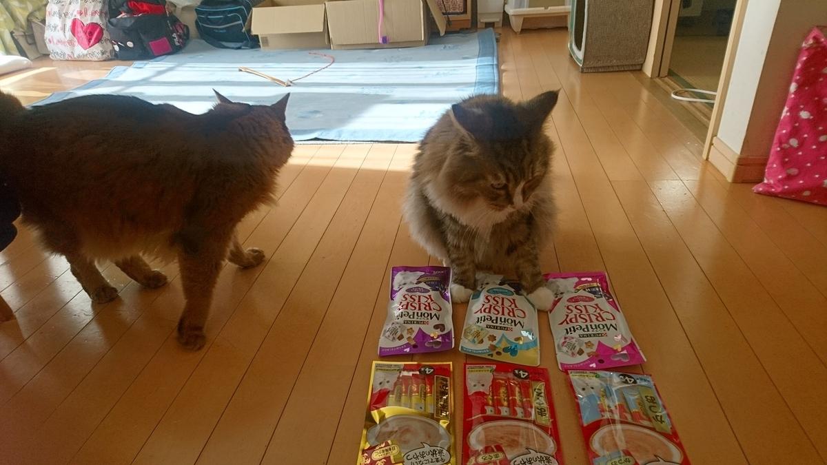 サンタからのプレゼントに喜ぶ猫、トトとチー