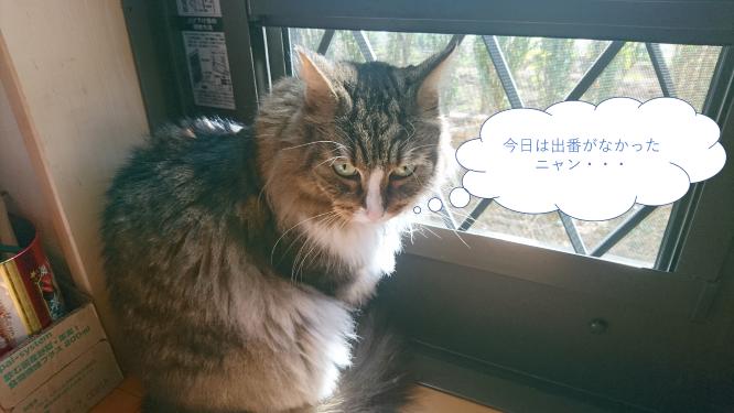 出番のない猫、トト