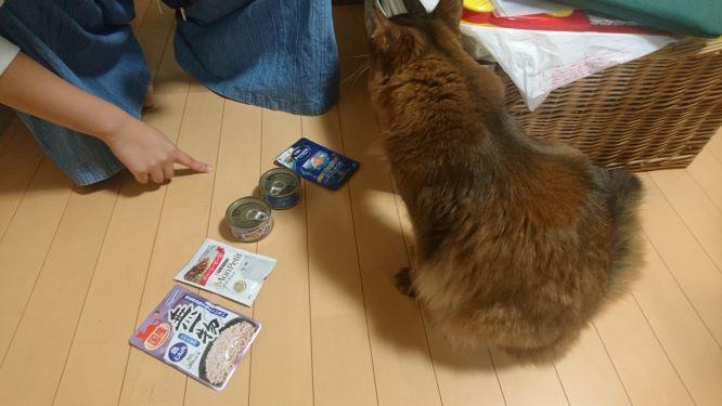 猫に餌を選ばせる娘、チー